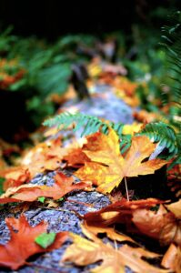leaves yellow oneplus nord wallpaper