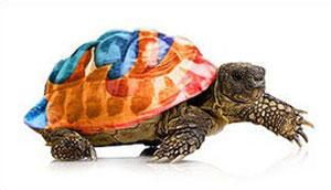 Slow Firefox